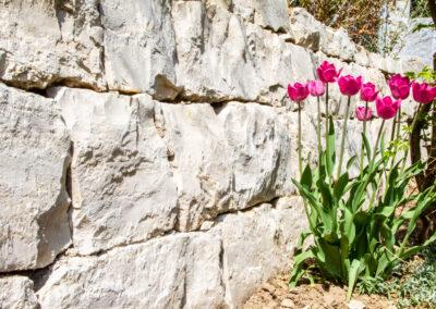 Nahaufnahme Kalkstein mit Tulpen